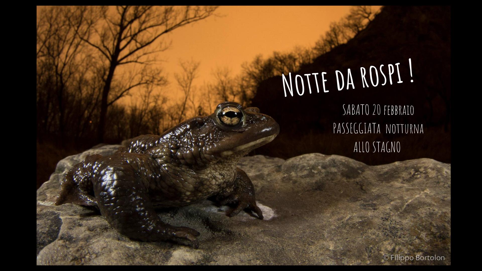 Notte da Rospi! – Passeggiata notturna allo stagno