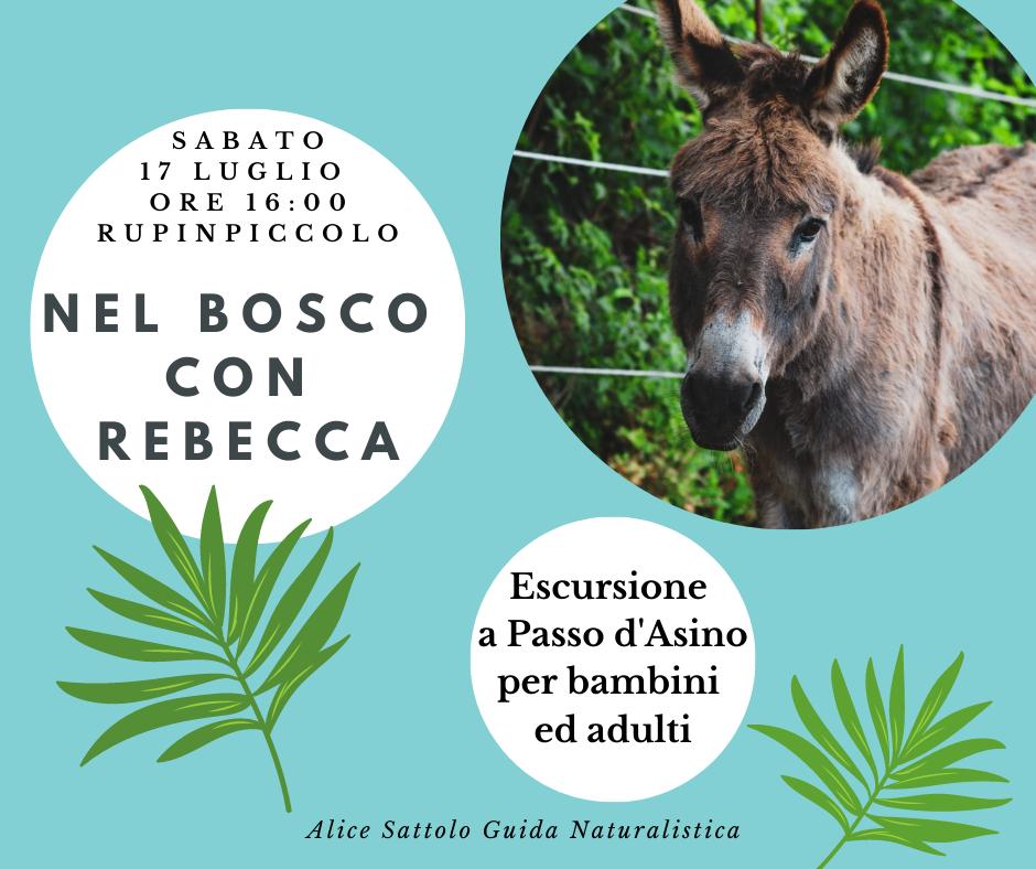 Nel Bosco con Rebecca – Passeggiata a Passo d'Asino